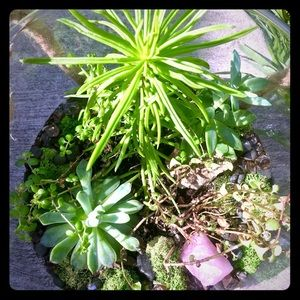 Other - Terrariums.. with crystals... DIY KITS